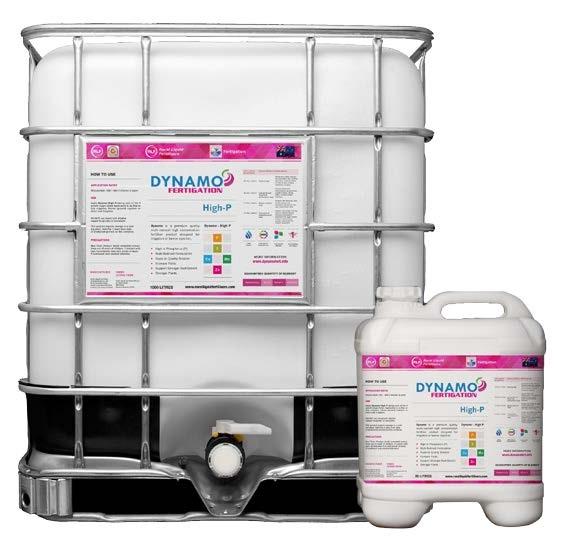 Dynamo High-P
